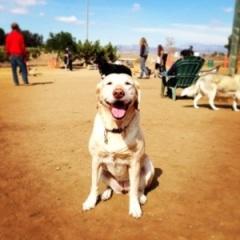 Dog Park at Silver Lake